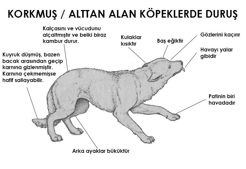 Yabancı bir köpeğe nasıl yaklaşılmalı?
