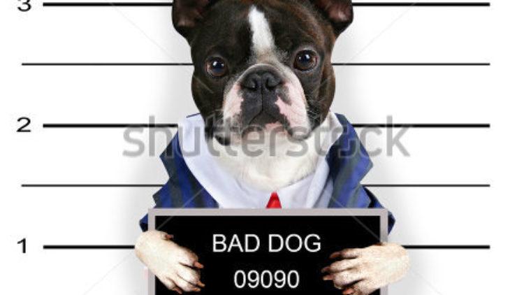 Kedi, köpek; kısaca pet sahiplerinin yasal hakları ve sorumlulukları nelerdir?