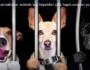 Yasaklı Köpek Irkları Konusunda Bir Kaç Kelam
